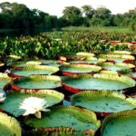 Que as universidades católicas introduzam nos currículos a defesa da Amazônia