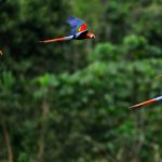 Como o Papa, CNBB apoia realização de Sínodo para a Pan-Amazônia