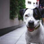 O cão que faz pensar o homem